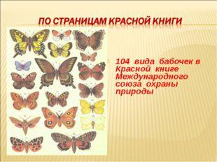 104 вида бабочек в Красной книге Международного союза охраны природы
