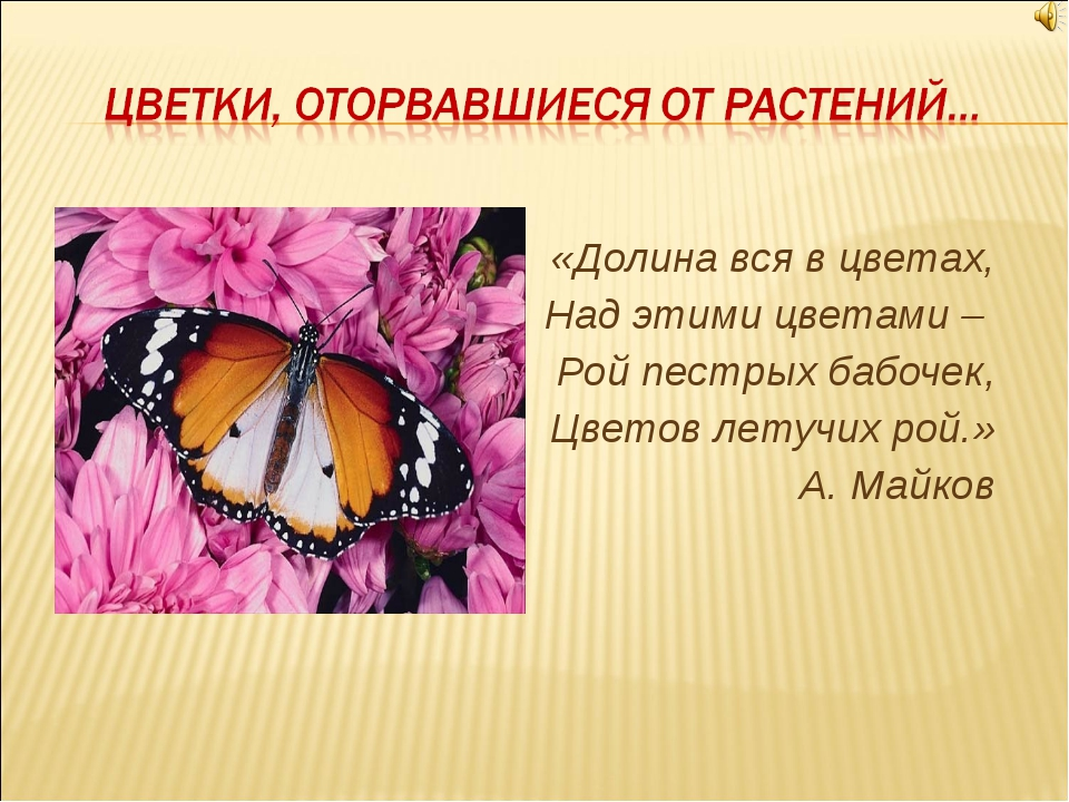 «Долина вся в цветах, Над этими цветами – Рой пестрых бабочек, Цветов летучи...