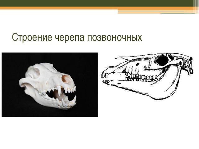 Строение черепа позвоночных