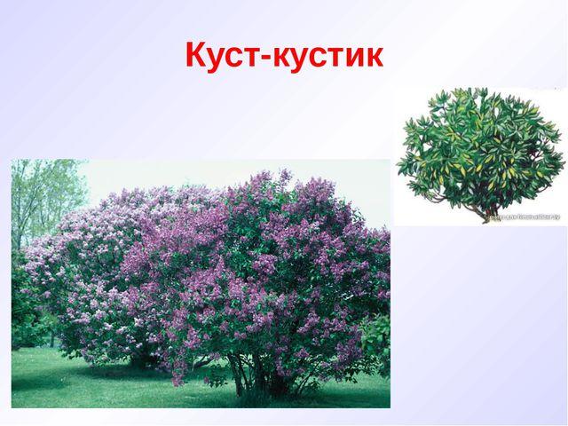 Куст-кустик
