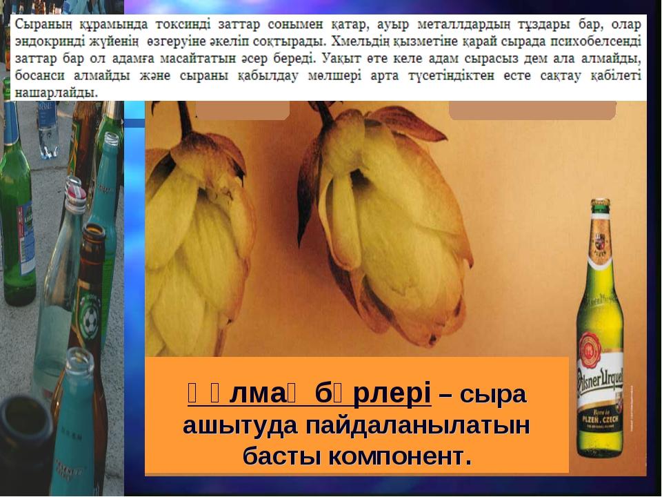 Құлмақ бүрлері – сыра ашытуда пайдаланылатын басты компонент.