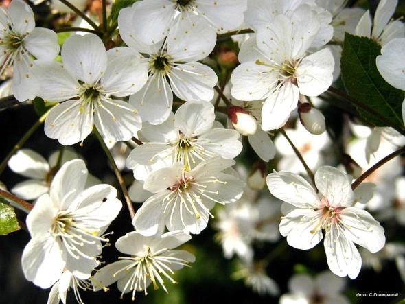 D:\цветы\197_1024.jpg