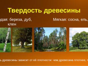Твердость древесины Твердая: береза, дуб, клен Мягкая: сосна, ель, липа Тверд