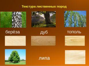 Текстура лиственных пород берёза дуб тополь липа