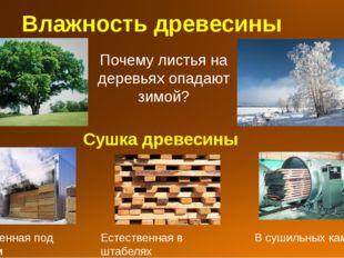 Влажность древесины Почему листья на деревьях опадают зимой? Сушка древесины