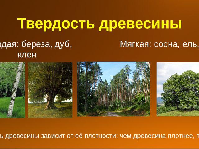 Твердость древесины Твердая: береза, дуб, клен Мягкая: сосна, ель, липа Тверд...