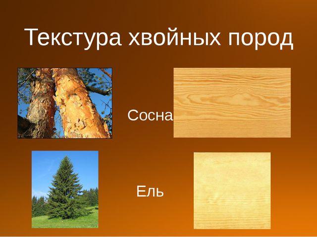 Текстура хвойных пород Сосна Ель