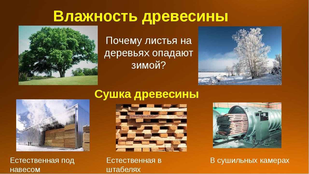 Влажность древесины Почему листья на деревьях опадают зимой? Сушка древесины...