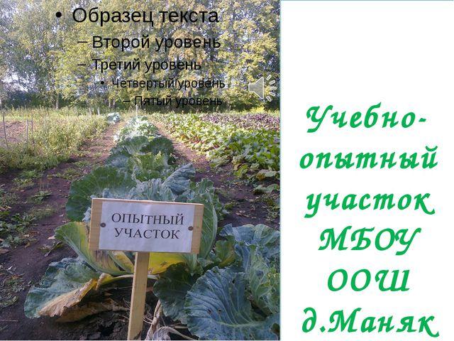 Учебно- опытный участок МБОУ ООШ д.Маняк