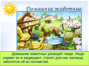 Домашние животные. Домашних животных разводят люди. Люди кормят их и защ