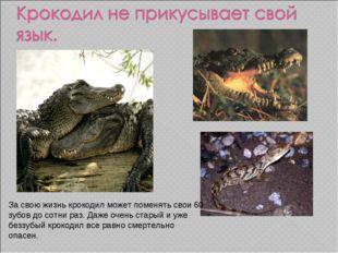 За свою жизнь крокодил может поменять свои 60 зубов до сотни раз. Даже очень