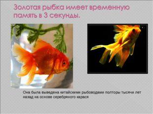 Она была выведена китайскими рыбоводами полторы тысячи лет назад на основе се