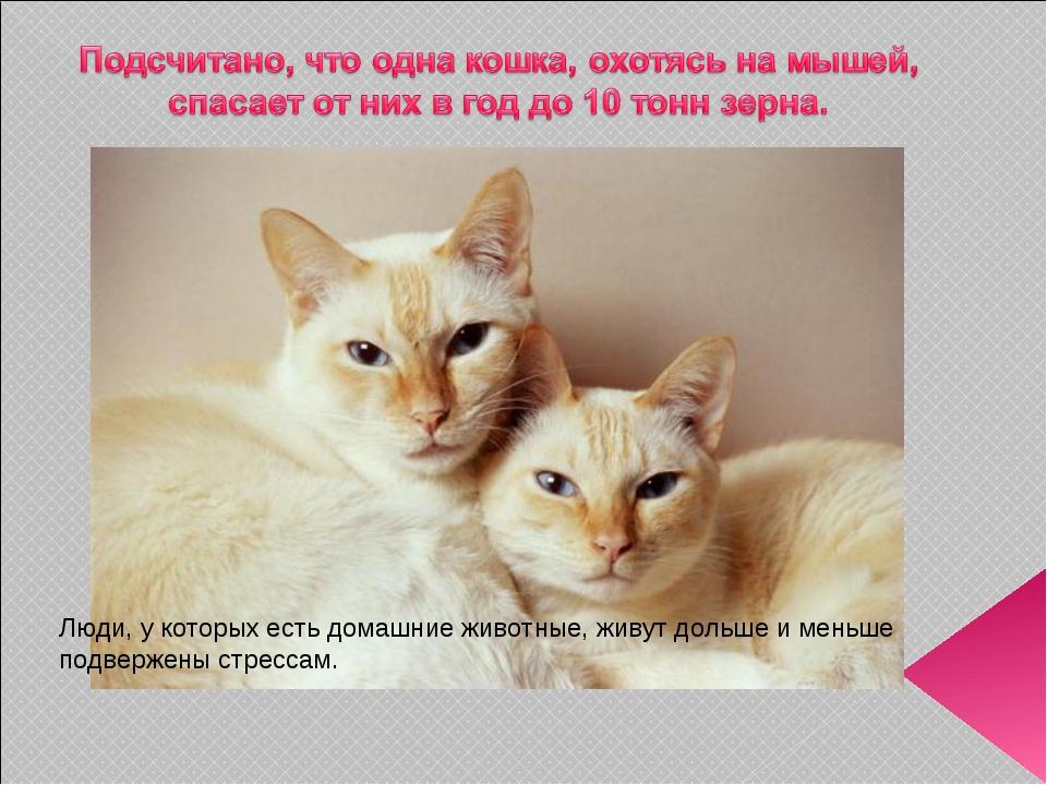 Люди, у которых есть домашние животные, живут дольше и меньше подвержены стре...