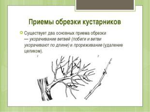 Приемы обрезки кустарников Существует два основных приема обрезки —укорачива