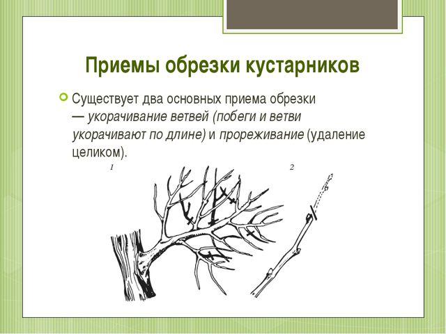Приемы обрезки кустарников Существует два основных приема обрезки —укорачива...