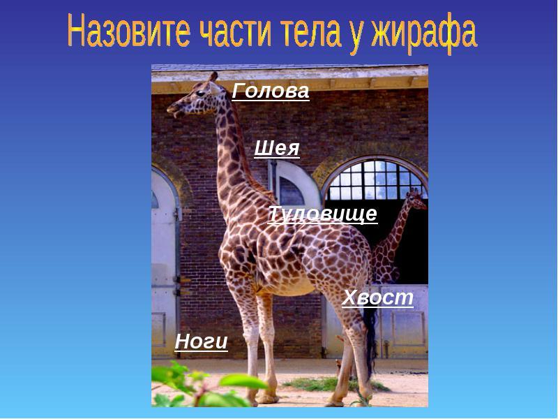 hello_html_49d62a6a.jpg
