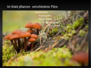 Im Wald pflanzen verschiedene Pilze.
