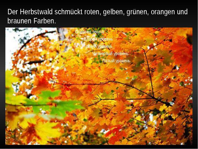 Der Herbstwald schmückt roten, gelben, grünen, orangen und braunen Farben.