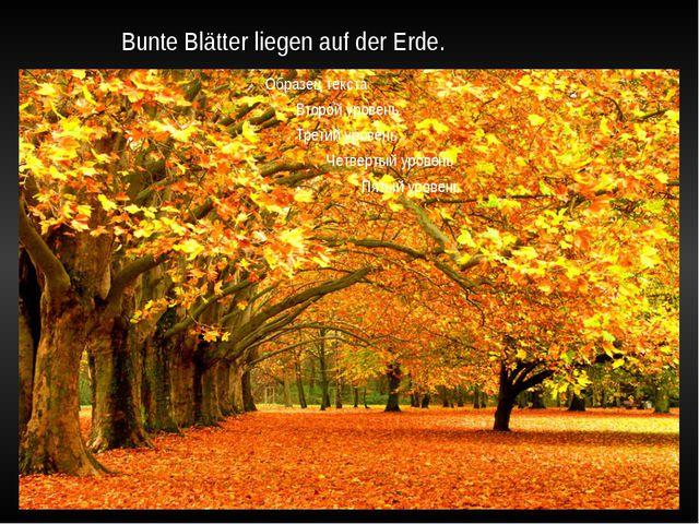 Bunte Blätter liegen auf der Erde.