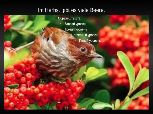 Im Herbst gibt es viele Beere.