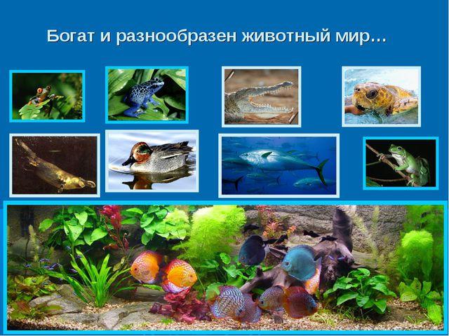 Богат и разнообразен животный мир…