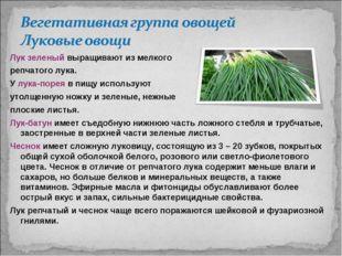 Лук зеленый выращивают из мелкого репчатого лука. У лука-порея в пищу использ