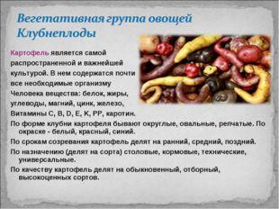 Картофель является самой распространенной и важнейшей культурой. В нем содерж