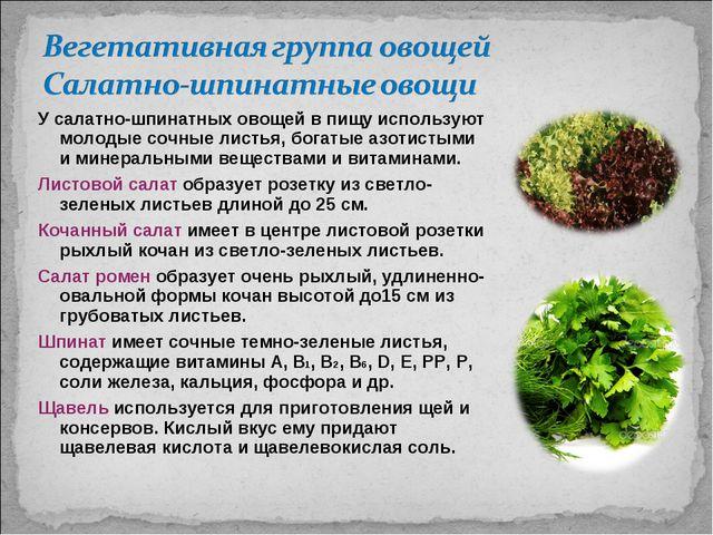 У салатно-шпинатных овощей в пищу используют молодые сочные листья, богатые а...