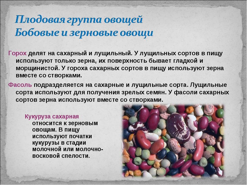 Кукуруза сахарная относится к зерновым овощам. В пищу используют початки куку...