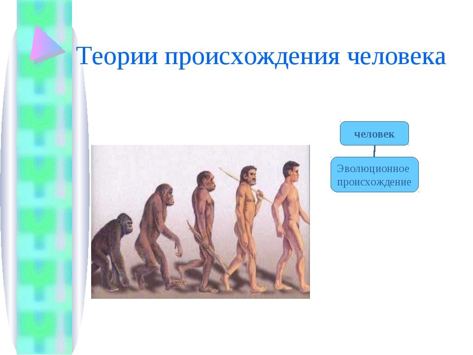 Теории происхождения человека