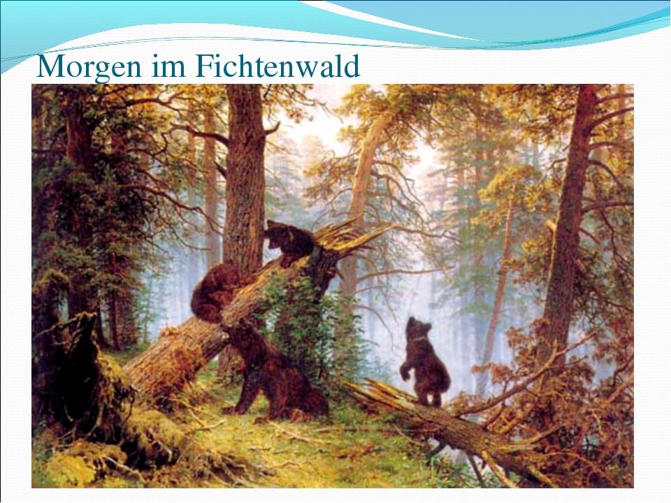 Morgen im Fichtenwald