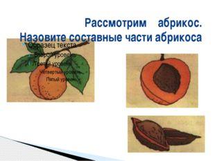 Рассмотрим абрикос. Назовите составные части абрикоса