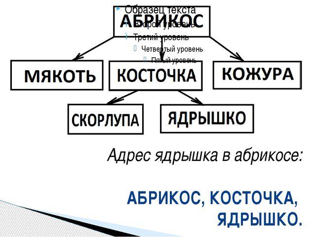 Адрес ядрышка в абрикосе: АБРИКОС, КОСТОЧКА, ЯДРЫШКО.
