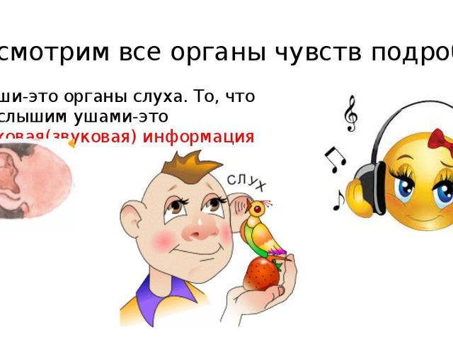 Рассмотрим все органы чувств подробно 1. Уши-это органы слуха. То, что мы слы...