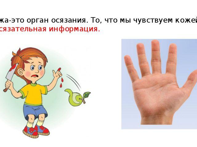 4. Кожа-это орган осязания. То, что мы чувствуем кожей, - это осязательная ин...