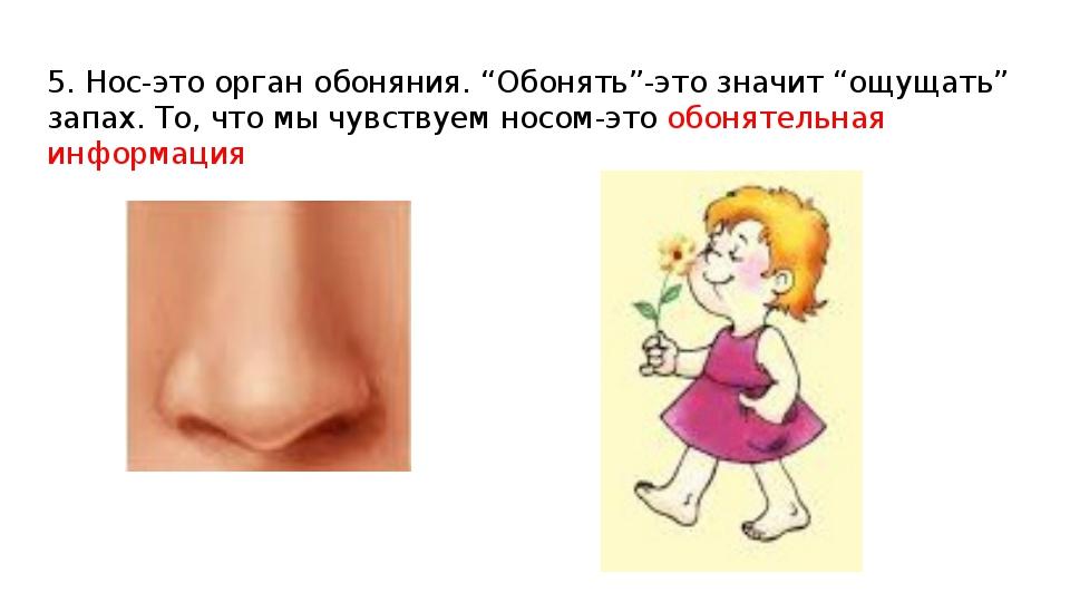 """5. Нос-это орган обоняния. """"Обонять""""-это значит """"ощущать"""" запах. То, что мы ч..."""