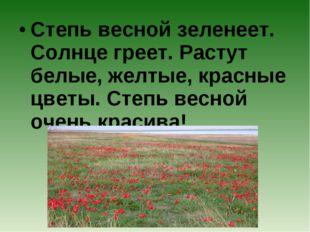 Степь весной зеленеет. Солнце греет. Растут белые, желтые, красные цветы. Сте