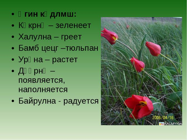 Үгин көдлмш: Үгин көдлмш: Көкрнә – зеленеет Халулна – греет Бамб цецг –тю...