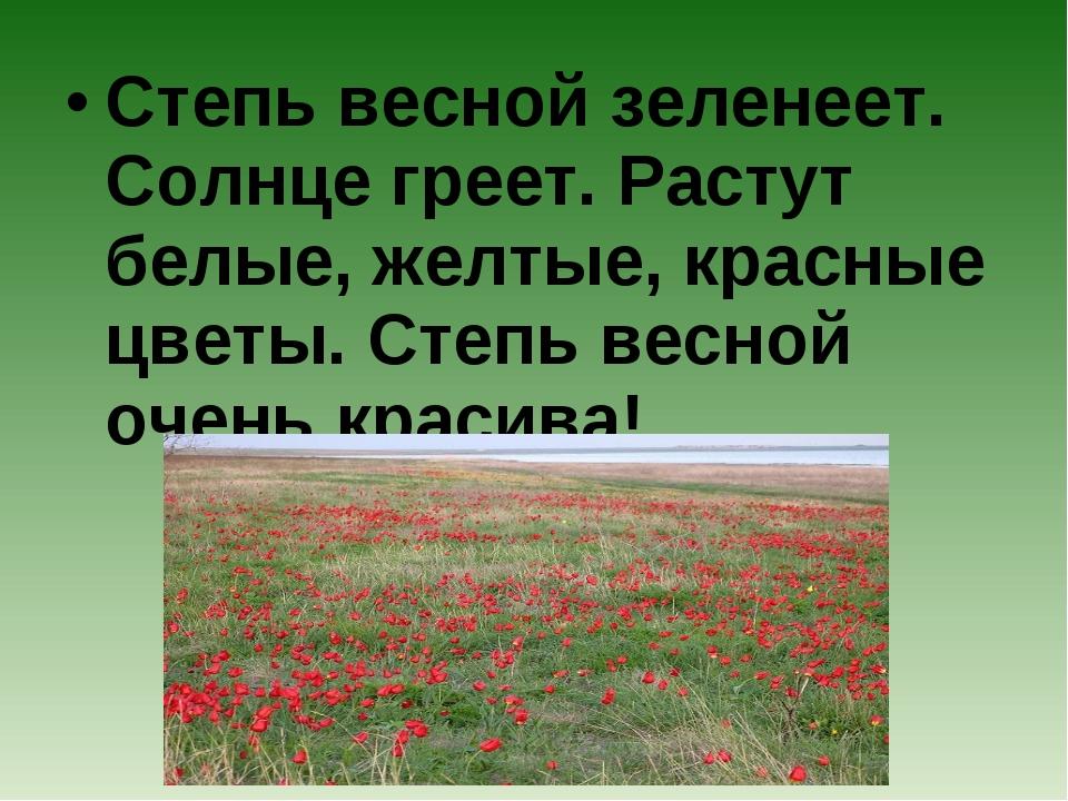 Степь весной зеленеет. Солнце греет. Растут белые, желтые, красные цветы. Сте...
