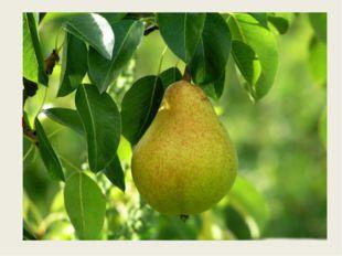 Этот фрукт на вкус хорош И на лампочку похож. груша