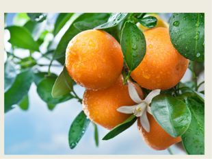 С оранжевой кожей, На мячик похожий, Но в центре не пусто, А сочно и вкус