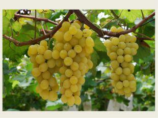 На шнурочке-стебелёчке Сладких ягод груда На большое блюдо. виноград