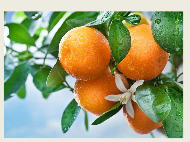 С оранжевой кожей, На мячик похожий, Но в центре не пусто, А сочно и вкус...