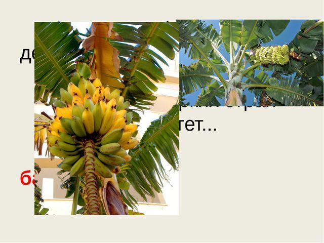 Знают этот фрукт детишки, Любят есть его мартышки. Родом он из жарких стра...