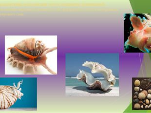 У большинства моллюсков тело покрыто раковиной. Раковина состоит наружного ро