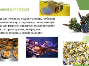Значение моллюсков Пища для человека: мидии, устрицы, гребешки Источники жемч
