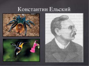 Константин Ельский