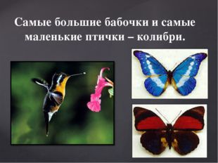 Самые большие бабочки и самые маленькие птички – колибри.