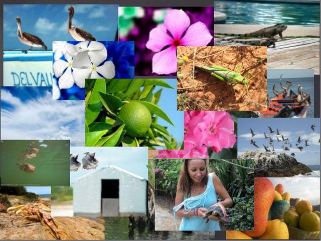 Природа и животные острова Маргарита Игуаны, цветы, пальмы и другие прелести...