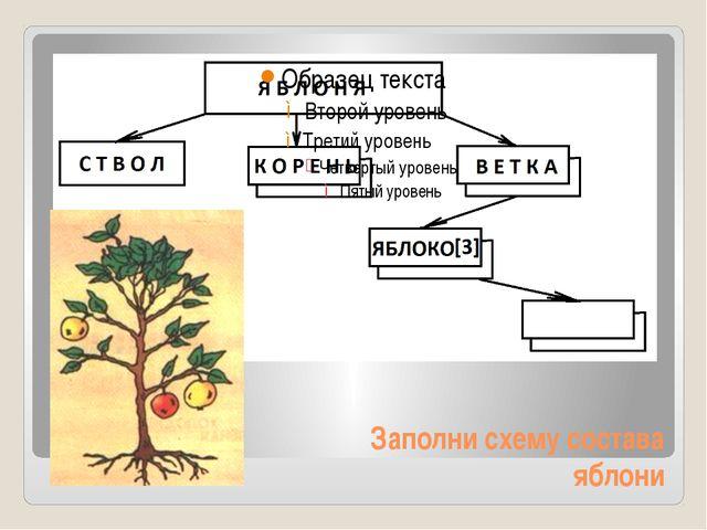 Заполни схему состава яблони